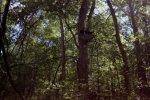 treestand1.jpg