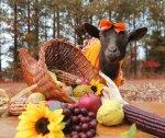 Thanksgiving Goat image2.jpg