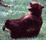 Laughing Bear.jpg