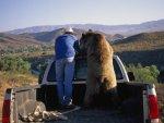 papa-bear-in-the-back-of-a-pick-up-truck_u-l-p8i1180.jpg