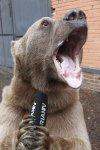 Singing Papa Bear.jpg