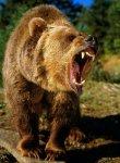 Papa Bear Z.jpg